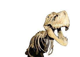 динозавр скелет Фото: www.paleometro.ru