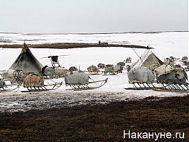 стойбище чум|Фото: Накануне.ru