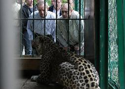 владимир путин леопард|Фото: www.premier.gov.ru