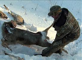 косули|Фото:1obl.ru