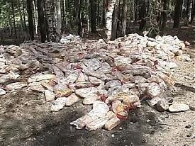 В лесу под Первоуральском найден выброшенный хлеб|Фото: www.vesti.ru