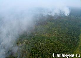 лесной пожар|Фото: Накануне.ru