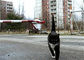 Припять зона отчуждения кот|Фото: http://pripyat.com/ru/