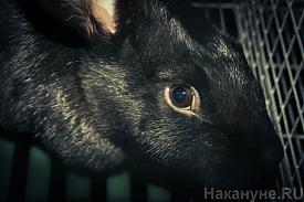 кролики ферма сельское хозяйство с/х|Фото: Накануне.RU