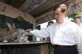 Дмитрий Медведев президент РФ кролик|Фото: joyer.ru