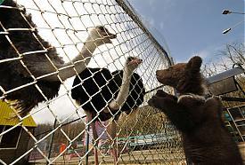 страус и медведь|Фото:Управление Россельхознадзора по Челябинской области