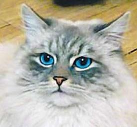 кот дорофей, невская маскарадная|Фото: