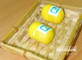 капсулы предсказание|Фото: www.ekazoo.ru