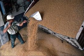пшеница уборка урожай зерно хлеб элеватор|Фото