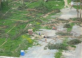 вырубка деревьев на ул. Ангарская-Кунарская Фото: Андрей Альшевских