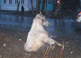 лошадь, колодец|Фото: МЧС Свердловской области