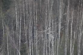 ан-2, крушение, поиски|Фото: ДИП губернатора Свердловской области