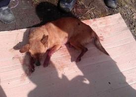 расстрел собака издевательства нижневартовск|Фото:
