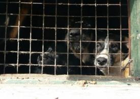 приют для животных сургут|Фото: