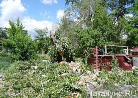 Курган ураган деревья Фото: Накануне.RU