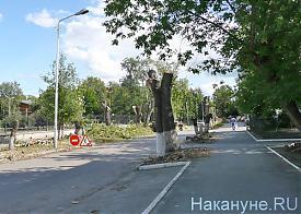 Курган, деревья|Фото: Накануне.RU