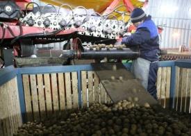 овощехранилище, картофель|Фото: пресс-служба губернатора