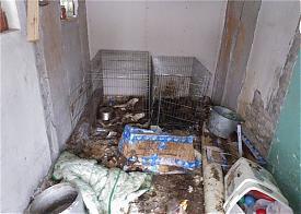 Сургут, зверство, жестокое обращение с животными|Фото: vk.com/kinform
