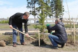 Кокорин сажает дерево|Фото: пресс-служба губернатора Курганской области