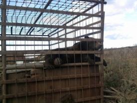 медведь клетка Южный Урал|Фото: vk.me