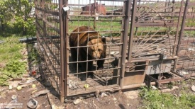 медведь клетка Южный Урал|Фото: vk.com