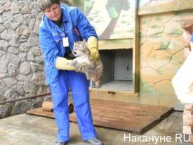 пума детеныши зоопарк|Фото: Накануне.RU