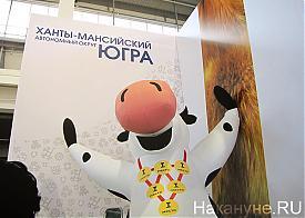 Агропромышленный форум, выставка, ХМАО, ЮГРА, корова|Фото: Накануне.RU
