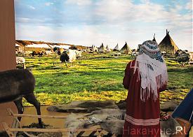 Агропромышленный форум, выставка, Ямало-Ненецкий автономный округ|Фото: Накануне.RU