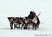 стойбище оленеводов упряжка ненцы|Фото: Накануне.ru