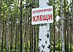 природа лес береза осторожно клещи табличка (2007) | Фото: Накануне.ru