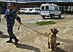 милиция кинологическая служба собака овчарка ищейка|Фото: Накануне.ru