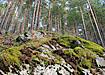 природа лес северный урал (2007)   Фото: Накануне.ru