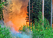 Пожар в лесу (2019) | Фото: Пресс-служба Авиалесоохраны