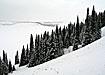 природа зима лес (2008) | Фото: Накануне.ru