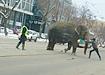 Слон на ул. 8 марта в Екатеринбурге (2020) | Фото: youtube.com/Андрей Грошев
