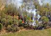 Лесной пожар (2020)   Фото: Накануне.RU