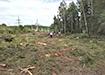 Вырубка деревьев в Асбесте (2020) | Фото: В.Н. Горелых
