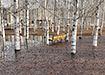 Парк Победы в Нижнем Тагиле (2021) | Фото: vk.com/novosti_v_tagile
