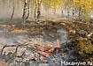 лесной торфяной пожар дым смог|Фото: Накануне.ru
