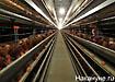 птицефабрика яйцо куры|Фото: Накануне.ru