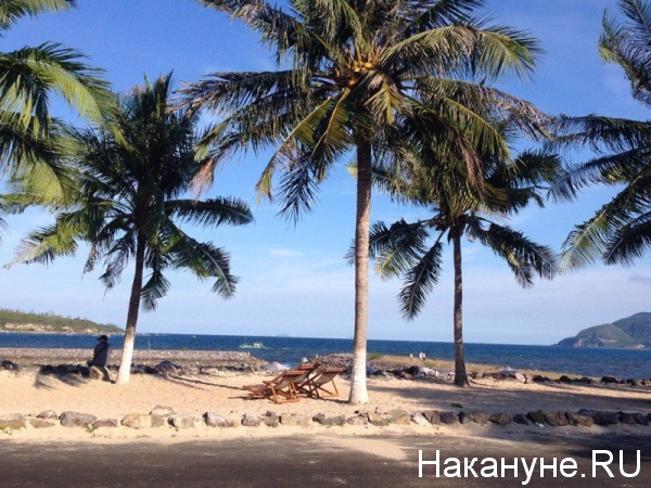 Вьетнам, Нячанг, пальмы, пляж, отпуск, отдых|Фото: Накануне.RU