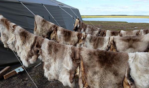 Ямал, сибирская язва, инспекция Кобылкина|Фото: правительство.янао.рф