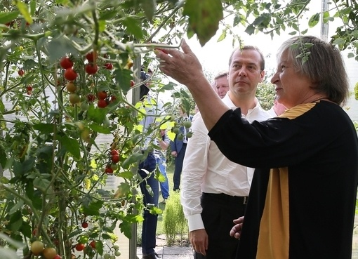 Дмитрий Медведев, встреча с садоводами, теплица Фото: government.ru