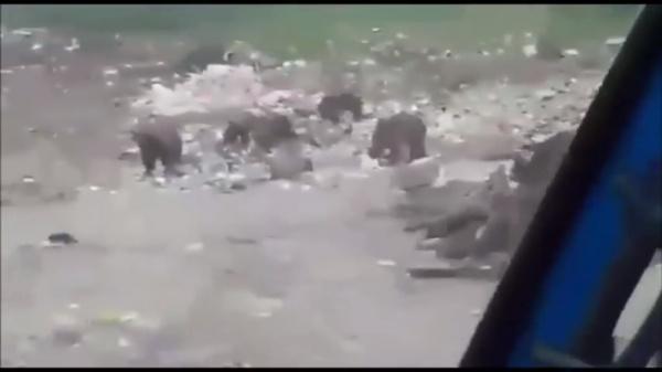 Медведи, свалка, Югра|Фото: youtube.com