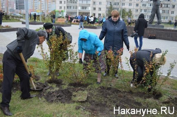 посадка деревьев, Курган, аллея Мальцева|Фото:Накануне.RU