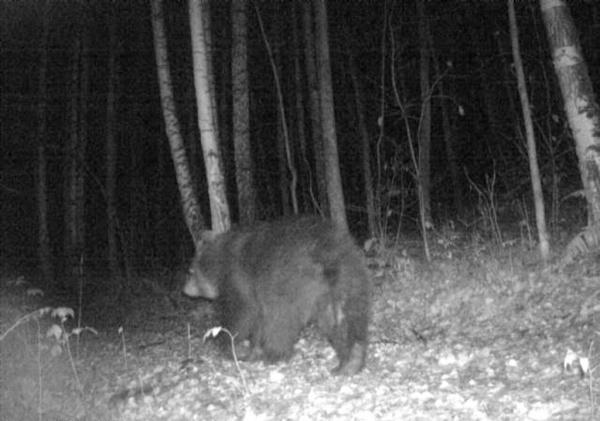 медведь, парк Таганай,|Фото: парк Таганай