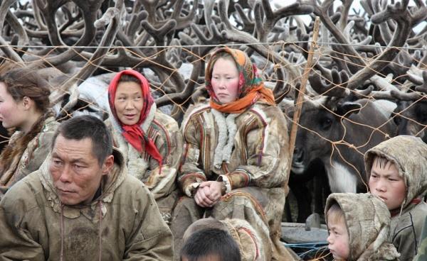 Кочевники, оленеводы, олени|Фото: правительство.янао.рф
