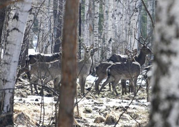 дикие животные, Средний Урал|Фото: Правительство Свердловской области