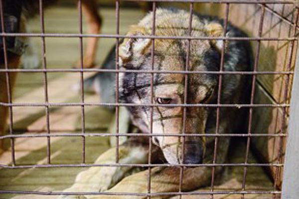 собака, бродячая собака, приют|Фото: мэрия Екатеринбурга