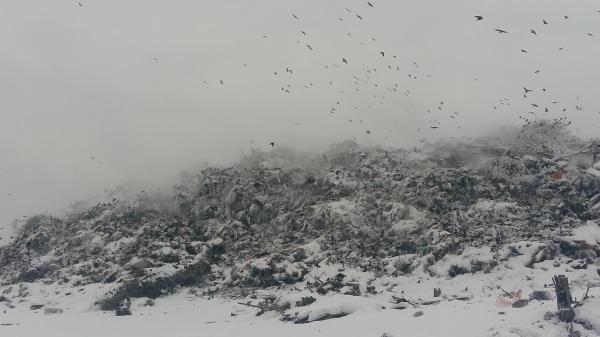 смог, городская свалка, Челябинск,|Фото: БЭФ Моя планета